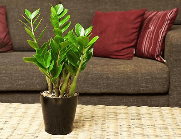 Lựa chọn cây để bàn phòng khách cho gia chủ tuổi Canh Dần